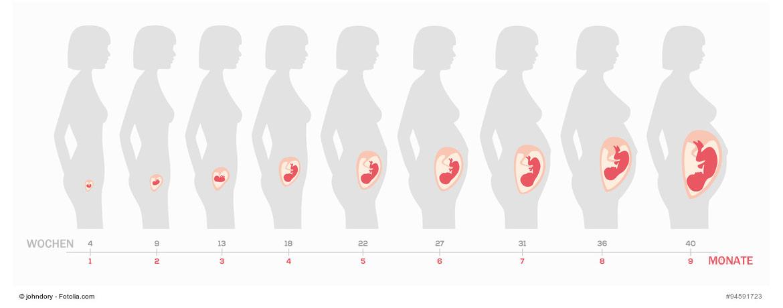 schwangerschaftswochen ssw schwangerschaftskalender 40 wochen. Black Bedroom Furniture Sets. Home Design Ideas